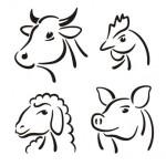 Zeichnung Kuh Schwein Schaf Huhn